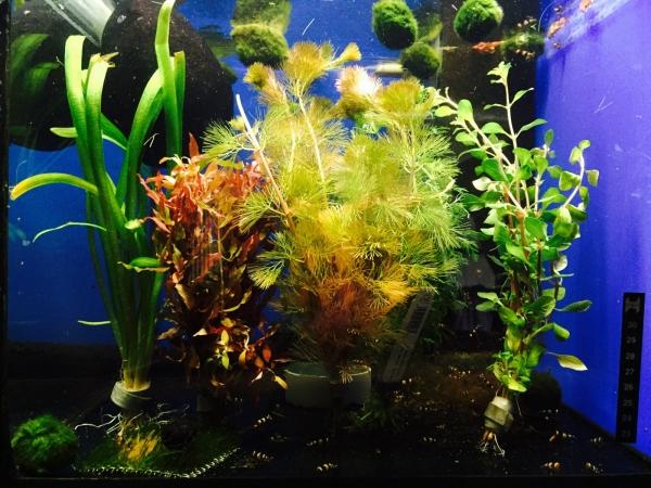 Wasserpflanzen Mix - 5 Bunde