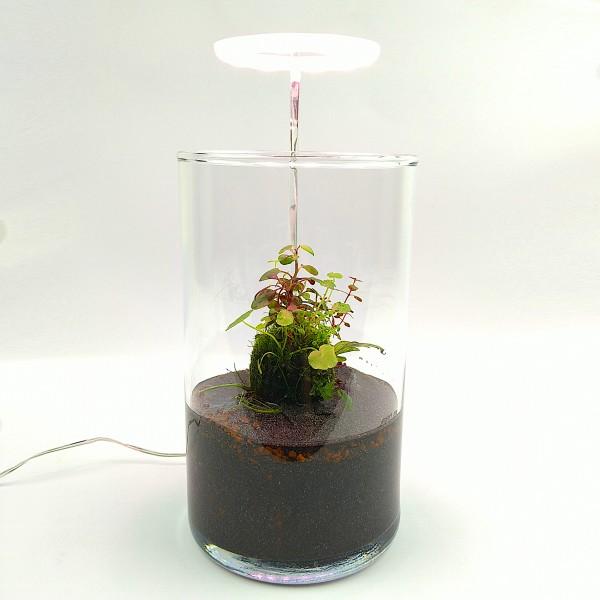 Wabi Kusa Set mit bepflanzen Moosball inkl. Beleuchtung