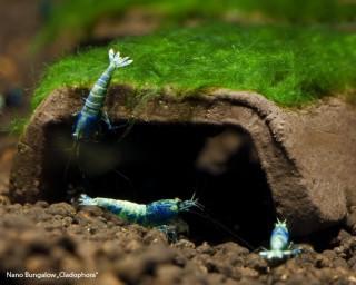 Nano-Bungalow mit Moos - Aquarium Deko