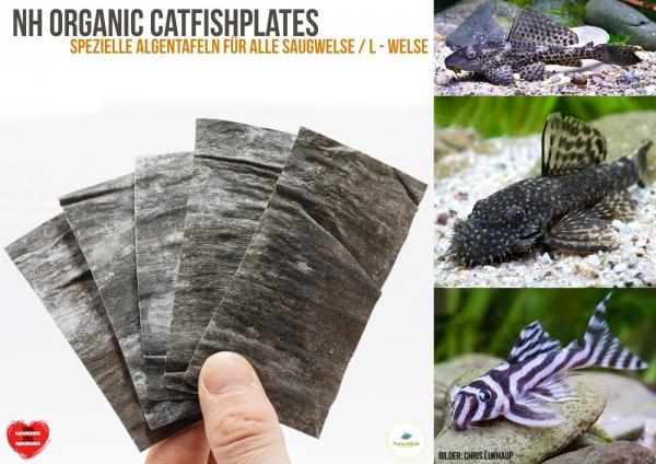 NatureHolic - CatfishPlates - Algentafeln (5 stk.) für alle Saugwelse / L - Welse