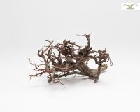 NatureHolic Tausendäster 15-20 cm