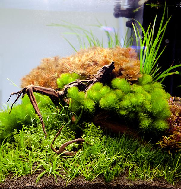 aquarium_mit_co2