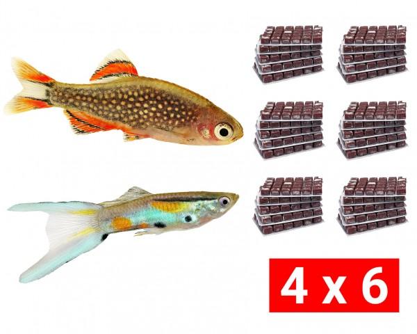 Frostfutter Bundle für Nano- und Minifische - 24 Stk.