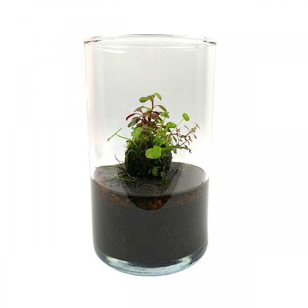 Wabi Kusa Set mit bepflanzen Moosball