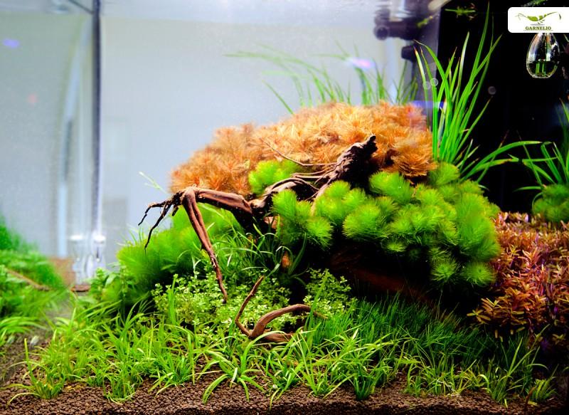 aquarium_einrichten_garnelen