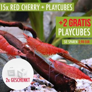 15 St. Red Cherry Garnelen + 2x Playcube