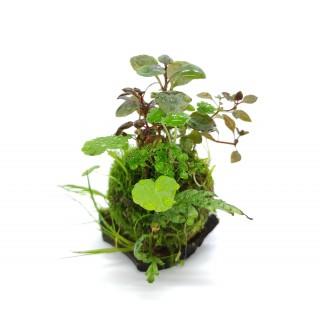 Wabi Kusa Ball - bepflanzt