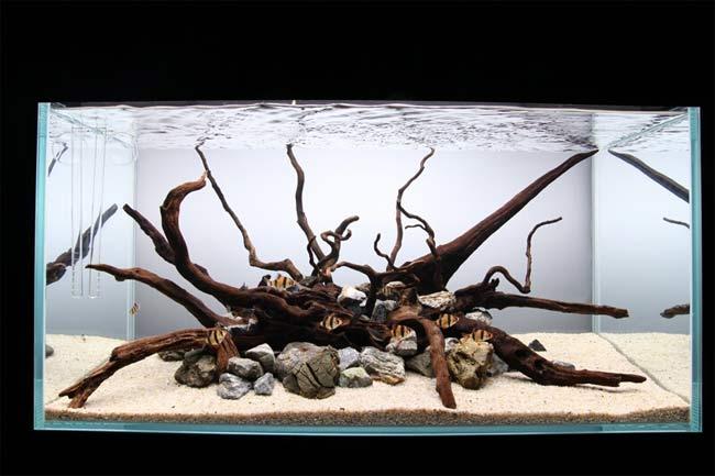 ist ein aquarium ohne pflanzen m glich aquarianer tipps. Black Bedroom Furniture Sets. Home Design Ideas