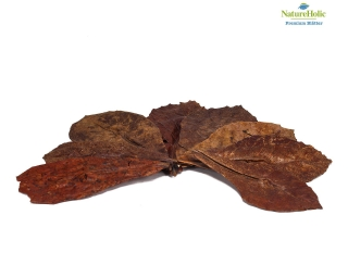 NatureHolic Seemandelbaumblätter (M) - 10 stück - bis 7 cm