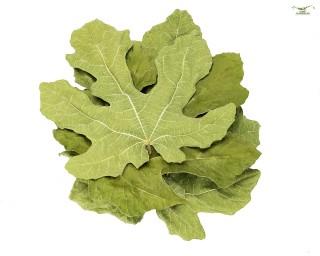 Feigenblätter - 4 Blätter