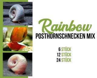Posthornschnecken mix - Rainbow