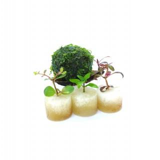 Wabi Kusa Ball MoosMix mit 3 Pflanzen - WabiBall DIY