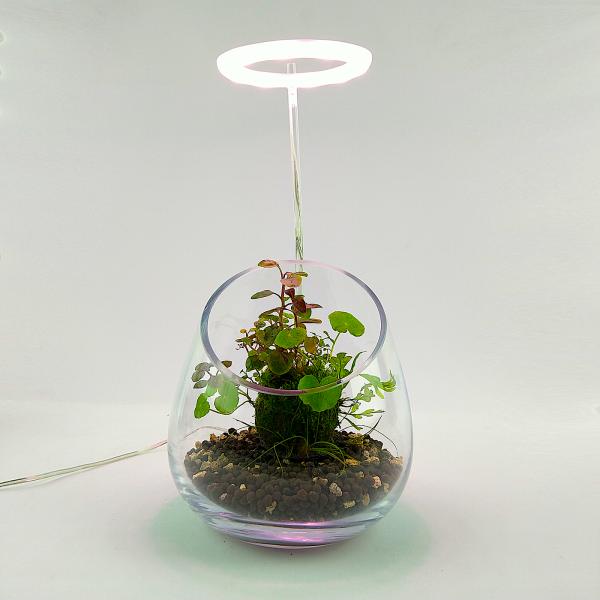 """Wabi Kusa Set mit bepflanzem Moosball - """"Trulla"""" mit Pflanzenlicht"""