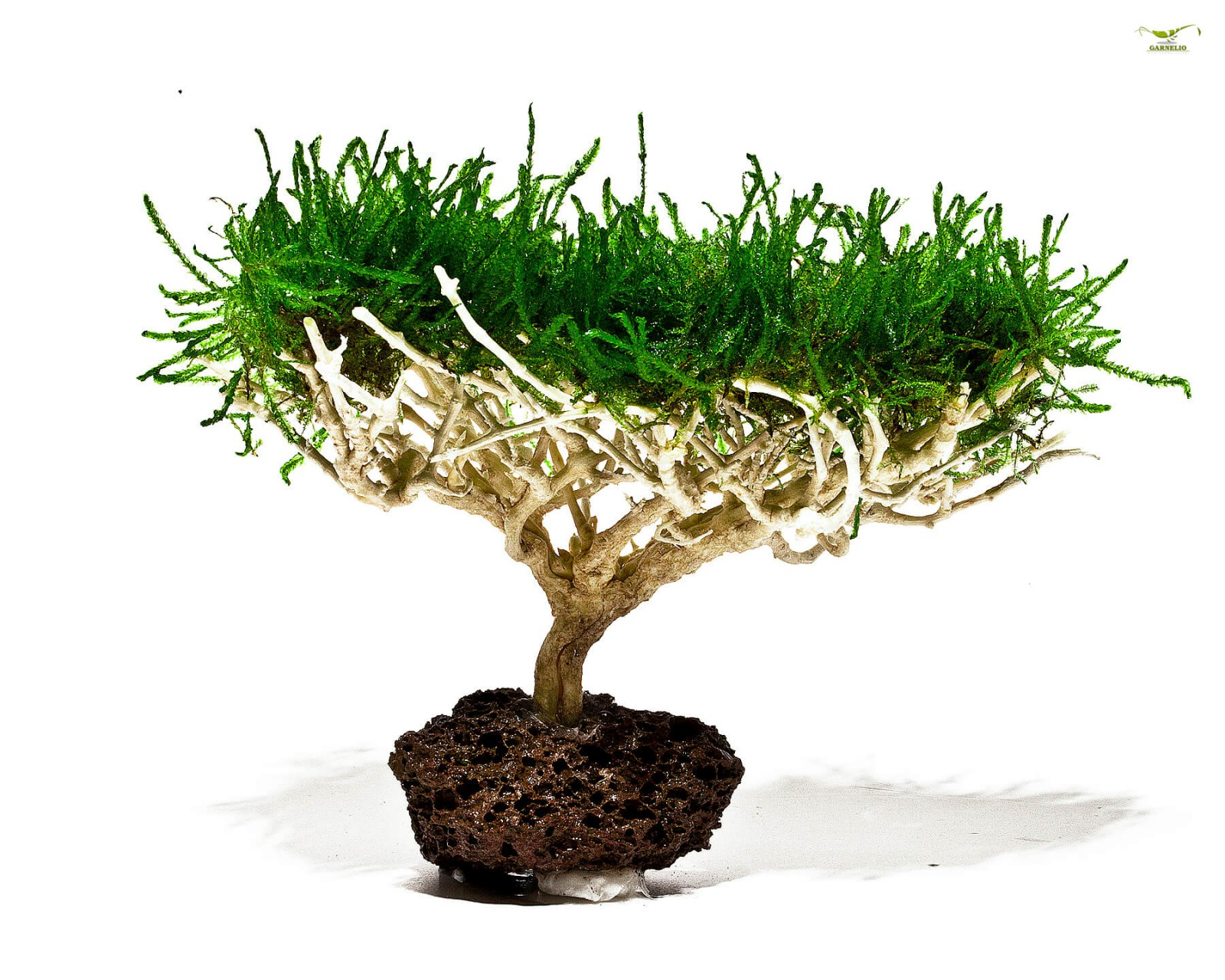 bepflanzte deko aquariumpflanzen garnelen onlineshop. Black Bedroom Furniture Sets. Home Design Ideas
