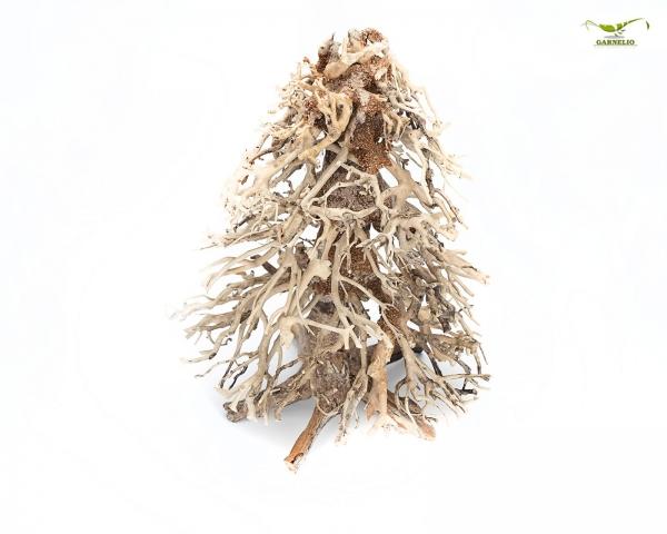 Christmas Bonsai Garnelenbaum für Aquascapes