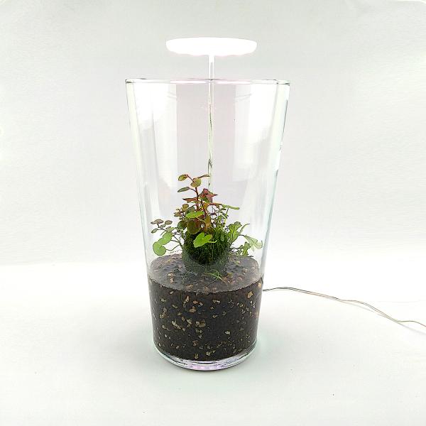 """Wabi Kusa Set mit bepflanzen Moosball - """"Turrim"""" mit Pflanzenlicht"""