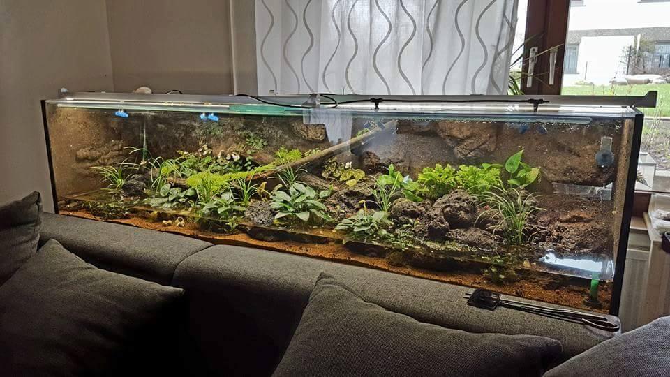 bunte juwelen im terrarium landkrabben der gattung geosesarma krabben blog garnelen. Black Bedroom Furniture Sets. Home Design Ideas