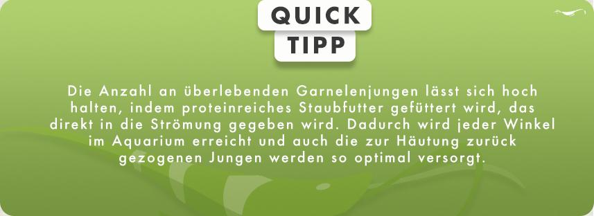 Quick Tipp