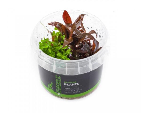 kleinblättrige Wasserpflanzen