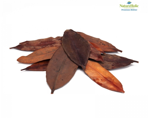 NatureHolic Mangrovenblätter - 10 Blätter
