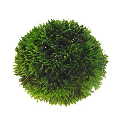 Plant Ball - verschiedene Größen