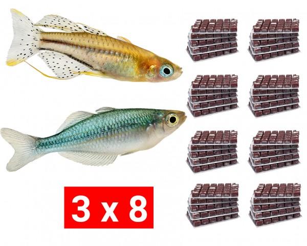 Frostfutter Bundle für Ährenfischartige - 24 Stk.