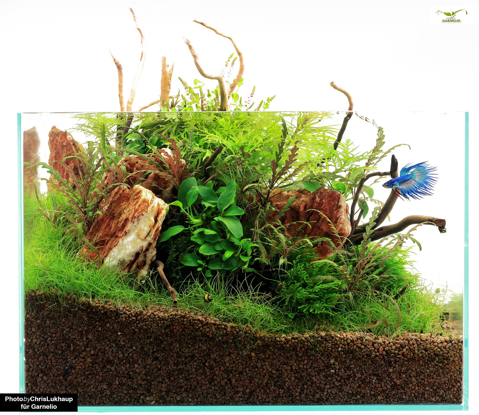 Umzug Mit Aquarium Aquarianer Tipps Blog Garnelen Onlineshop