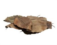 Birnenbaumblätter - 9 cm - 20 Stk