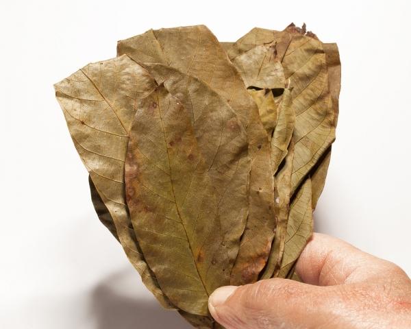 Walnusslaub, 20 Blätter