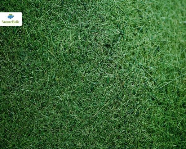 Natureholic Kokosfaser Matte 50 x 50, 1 cm dick - grün / Terrariumrückwand