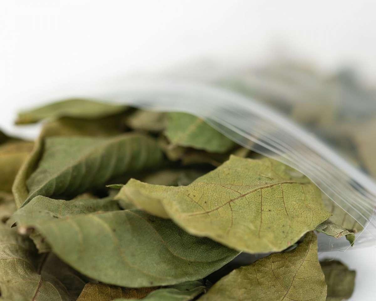 Grüne Walnussblätter