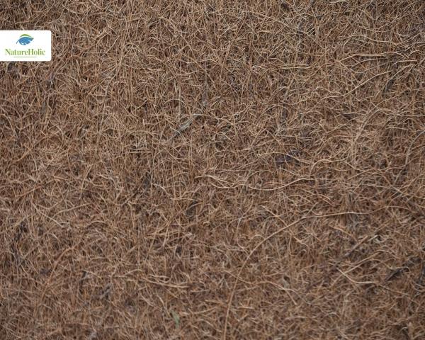 Natureholic Kokosfaser Matte 40 x 40, 1 cm dick / Terrariumrückwand
