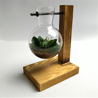 Hydrokultur Vintage Glas mit Javamoos & Anubia - Piece of Nature