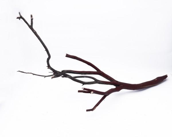 Manzanita Wood XL