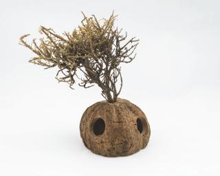 Nutwood Tree - mit 4-Löchern