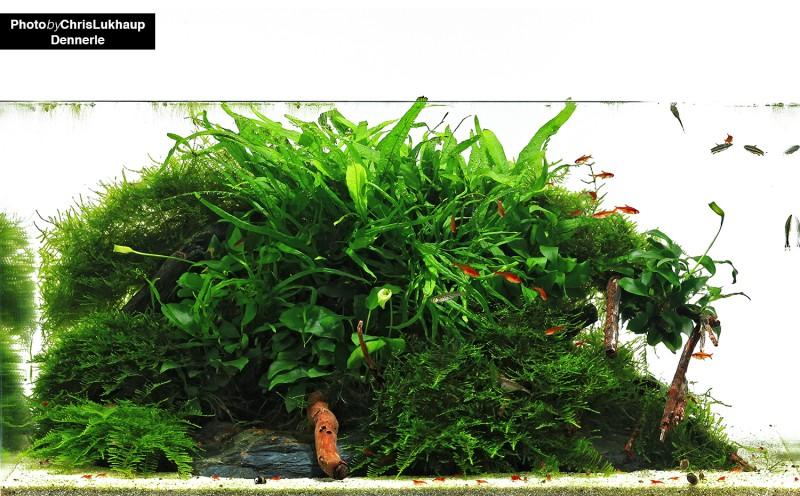nano_aquarium_dennerle