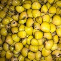 Asiatische Körbchenmuschel - Corbicula fluminea