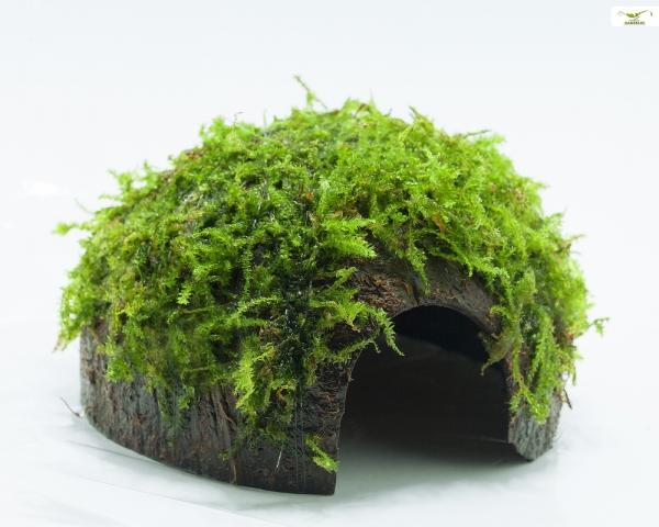 Moos Höhle / Coco Shell - Kokosnuss mit Christmasmoos bewachsen