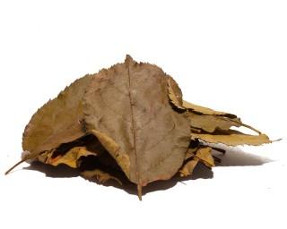 Apfelbaumblätter, 20 Blätter