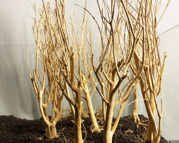 Slim Tree - vers. Größen