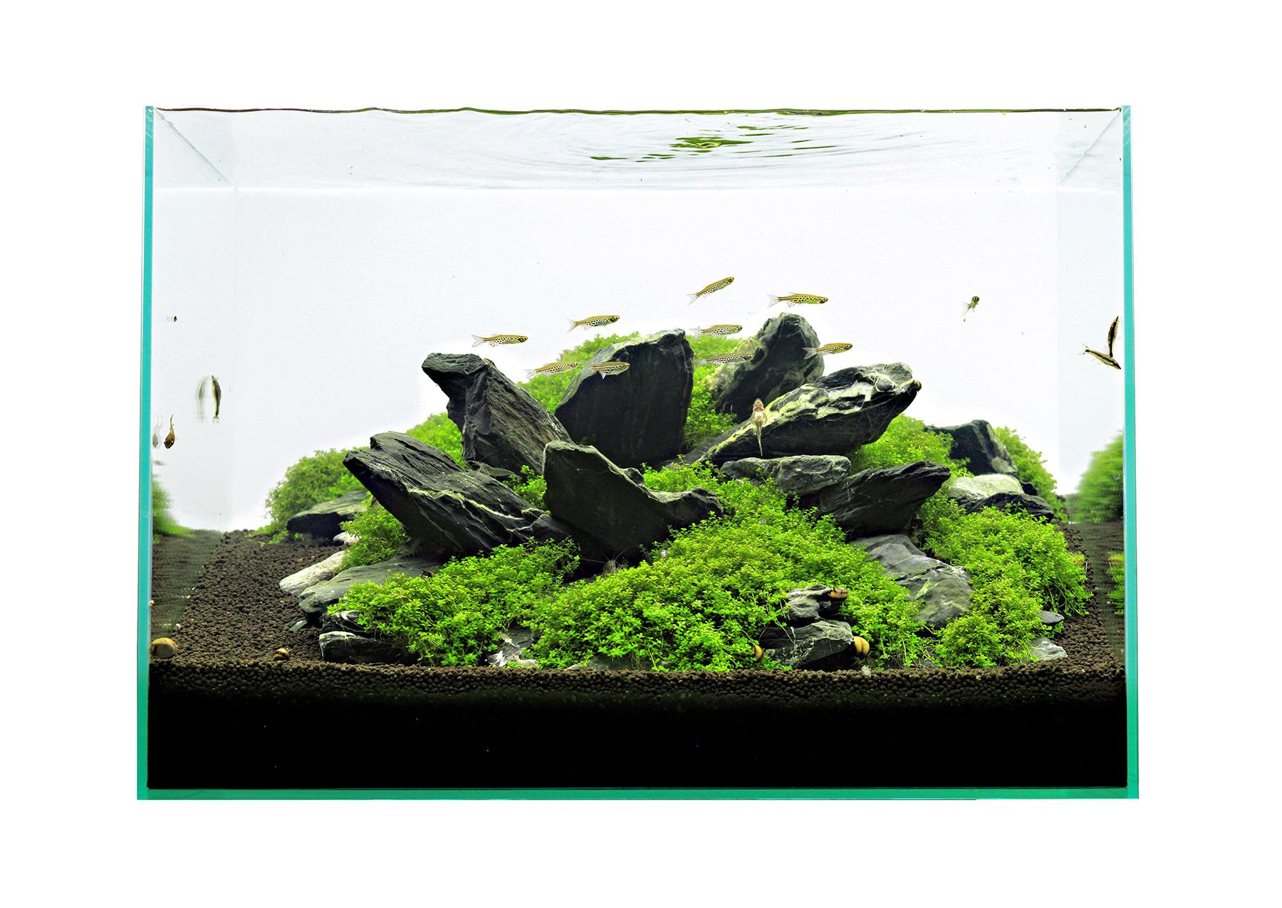 Das Einmaleins Der Aquarienpflanzen Vordergrundpflanzen