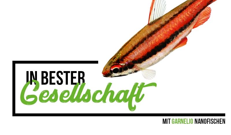 Online-Dating mehr Fisch Kostenlose Dating-Seiten in bir-al