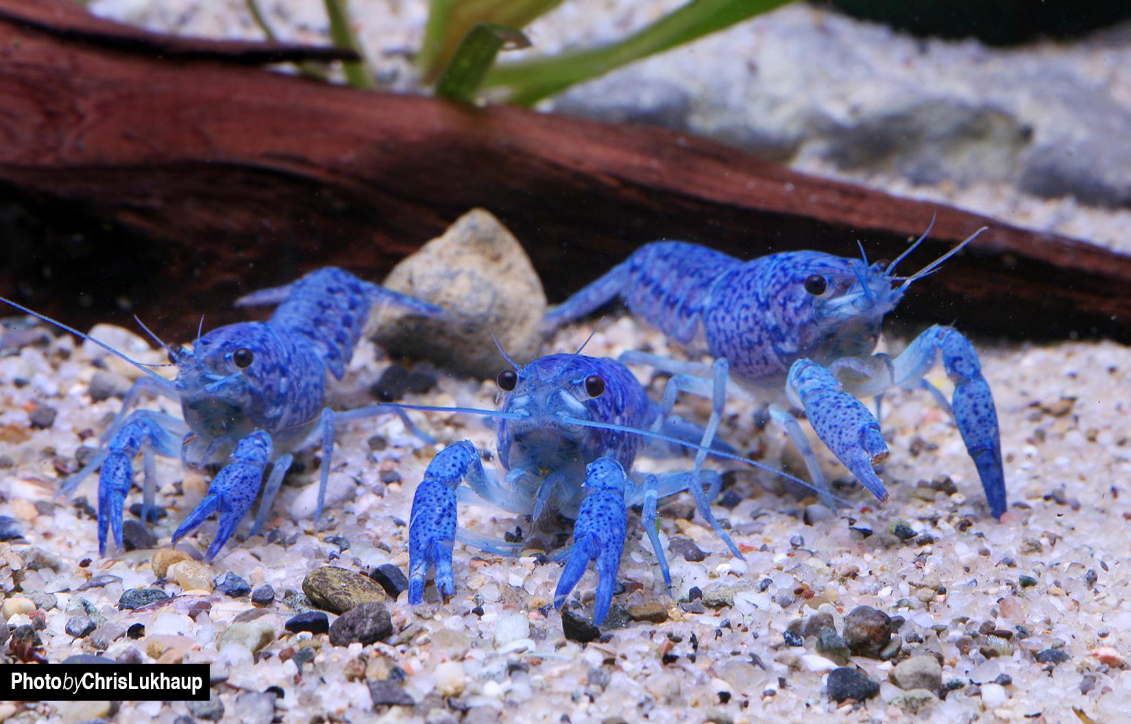 aquarium garnelen bilder