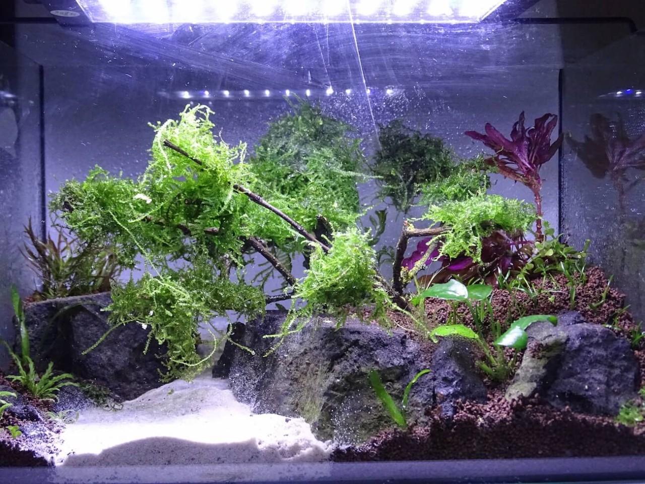 Low Budget Aquascaping - R?diger Thau Blog Mehr Garnelen ...