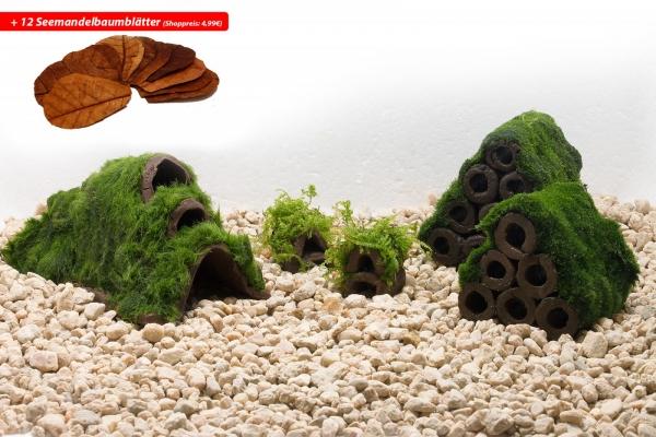 Moosparadies Set Up für Zwergkrebse + 12 x Seemandelbaumblätter
