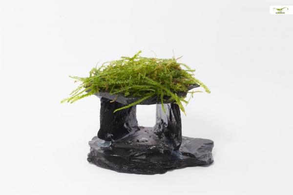Schiefer Haus mit Moos