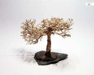 Crusta Baum auf Schiefer - Größe S