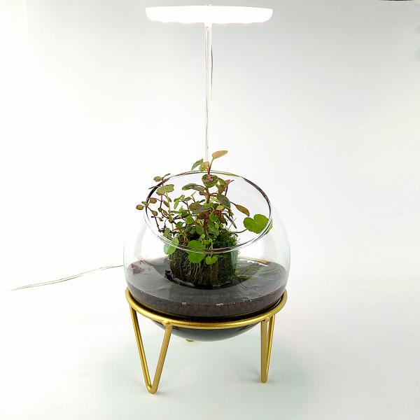 """Wabi Kusa Set mit bepflanzen Moosball - """"Goldenes Leben"""" mit Pflanzenlicht"""