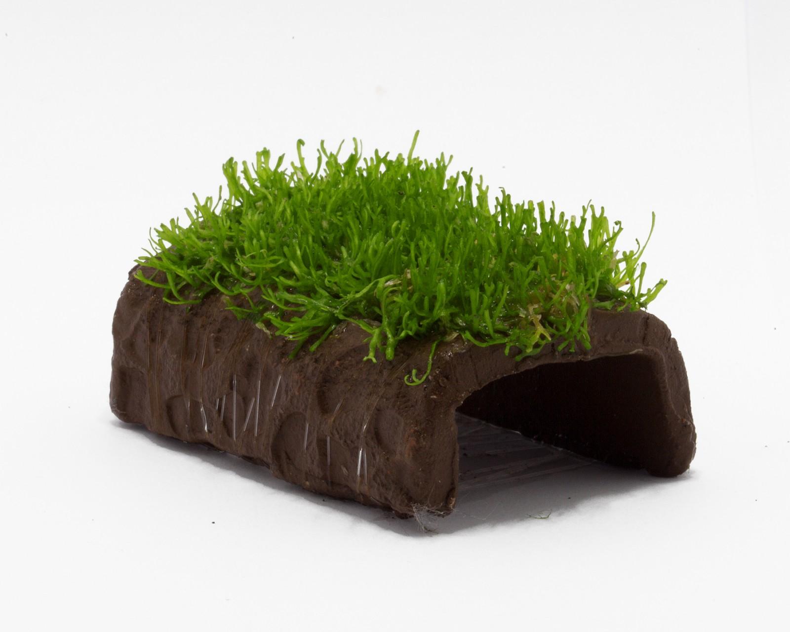 mit moos bepflanzte versteckpl tze aus keramik f r garnelen krebse und krabben im aquarium. Black Bedroom Furniture Sets. Home Design Ideas