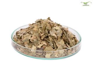 Garnelio - Haselnuss Blätter - 10 g